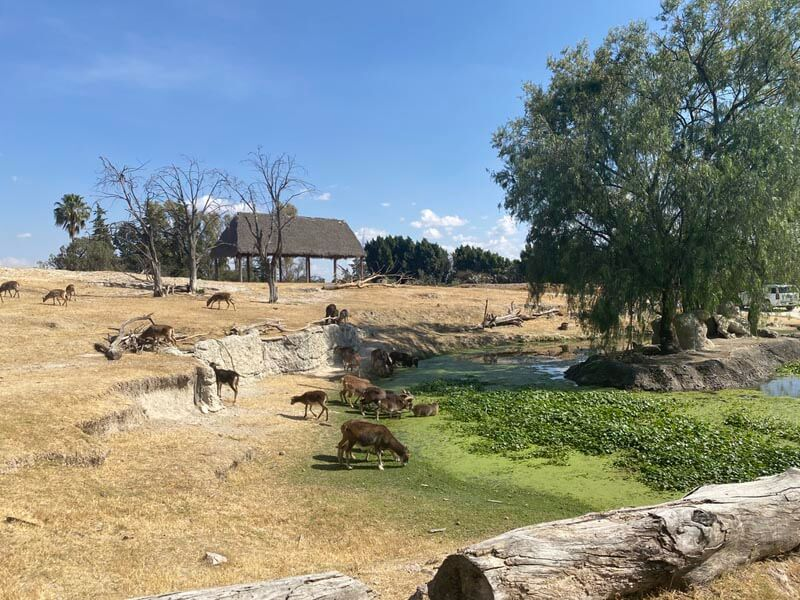 Visiting Africam Safari, one of the best Puebla activities