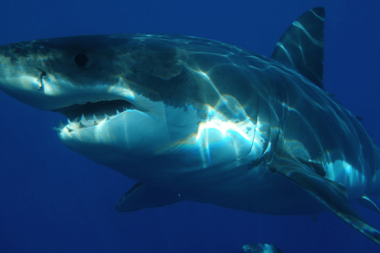 Shark Cage Diving in South Africa: 3 Stages of My Heroic Descend Among the White Sharks